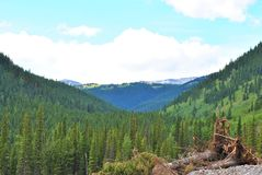 Kanadensiska Rockies, Alberta Fotografering för Bildbyråer