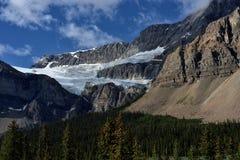 kanadensiska rockies Ranunkelglaciär Arkivfoto