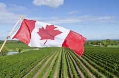 Kanadensiskt flaggaflyg över en vingård #1 Arkivbild