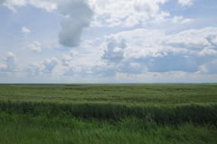 Kanadische Grasland-Landschaft lizenzfreie stockfotografie