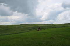 Kanadische Grasland-Landschaft stockbilder