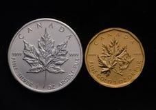 Kanadischer weißer Ahorn gegen Kanada-Goldahornblatt Lizenzfreie Stockbilder