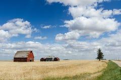 Kanadisches Grasland Stockbilder