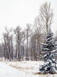 Kanadisches Winter-Ackerland Lizenzfreies Stockbild