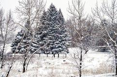 Kanadisches Winter-Ackerland Stockbild