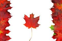 Kanadyjczyk Zdjęcie Royalty Free