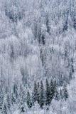 Kanadyjczyk North Slope z Mieszanym lasem po Śnieżnego spadku obrazy royalty free