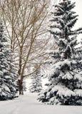Kanadyjczyk parkowa ścieżka na śnieżnym ranku obrazy royalty free