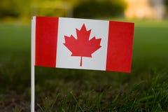 kanadyjczyka flaga trawa obrazy royalty free
