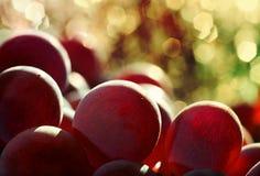 Kanadyjczyka Lydia winogrona jagodowi Obrazy Stock