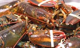 Kanadyjski rockowego homara wsad dla pokazu obrazy stock
