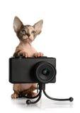 Kanadyjski sphynx z kamerą zdjęcia royalty free