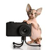 Kanadyjski sphynx z kamerą fotografia stock