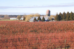Kanadyjski zimy jagody gospodarstwo rolne Zdjęcie Stock