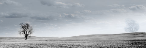 Kanadyjskich prerii pszeniczny pole obraz stock