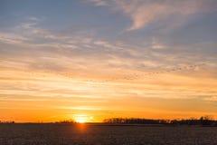 Kanadyjskie gąski Lata nad krajów polami w Złotego zimy słońce fotografia stock