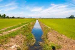 Kanal für die Bewässerung von bebauten Feldern Stockbild