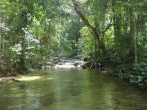 Kanal i djungeln Royaltyfria Bilder