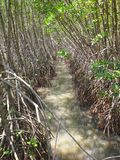 Kanal i mangroveskogen, Songkhla, Thailand Fotografering för Bildbyråer