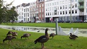 Kanal i Rotterdam royaltyfria foton
