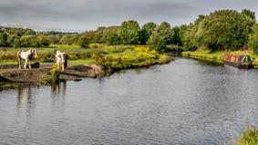 Kanal Leeds Liverpool mit einem Kanallastkahn und -tieren lizenzfreie stockbilder