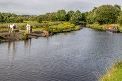 Kanal Leeds Liverpool mit einem Kanallastkahn und -tieren lizenzfreie stockfotografie
