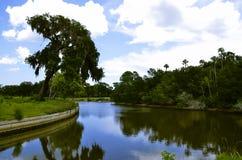 Kanal med det stora trädet på sida Royaltyfri Foto