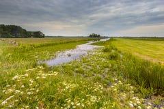 Kanal mit Wasser-Soldatvegetation Lizenzfreie Stockfotos