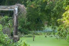 Kanal som fylls med alger royaltyfri bild