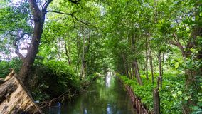 Kanal som omges av träd arkivfoton