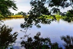 Kanal unter dem Baum Stockbild