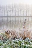 kanalfrosthoar nära vassen royaltyfri foto