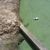 Kanalizacyjny żółw Zdjęcia Royalty Free