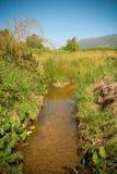 Kanalnatur - lerakontrollfördämning royaltyfri fotografi