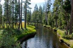 kanalskogvatten Arkivfoton