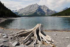 Free Kananaskis Lake And Mountains Royalty Free Stock Photography - 6121697
