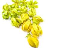 Kananga-oliebloemen Royalty-vrije Stock Afbeelding