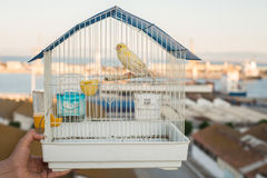 Kanarek w klatce Zdjęcia Stock
