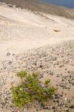 Kanarek wyspa zdjęcie royalty free