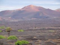 Kanariefågelö Lanzarote Arkivbilder