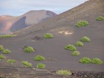 Kanariefågelö Lanzarote Royaltyfri Bild