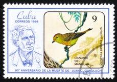 Kanariefågel för guundlachi för fågelDendroicapetechia av mangroven, den 90th årsdagen av döden av Juan C Gundlach circa 1986 Arkivbilder