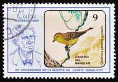 Kanariefågel för guundlachi för fågelDendroicapetechia av mangroven, ` den 90th årsdagen av döden av Juan C Gundlach `, circa 198 Arkivbild