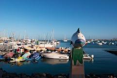 kanariefågelfuerteventura öar spain Fotografering för Bildbyråer
