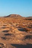 kanariefågelfuerteventura öar spain Arkivbilder