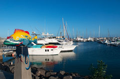 kanariefågelfuerteventura öar spain Royaltyfri Bild