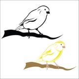 Kanarienvogel Lizenzfreies Stockbild