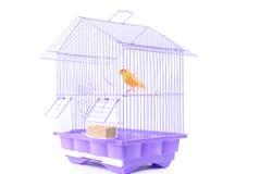 Kanarienvogel im Rahmen lizenzfreie stockfotos