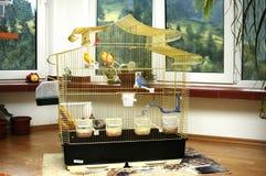 Kanarienvogel und Papagei lizenzfreie stockbilder