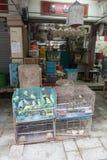 Kanarievogels voor Verkoop Royalty-vrije Stock Foto's